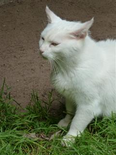 Geïrriteerde kat