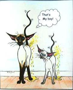 Sproeiende katten